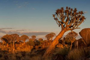 Morgens in Namibia
