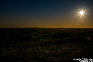 Weinberge in Worms