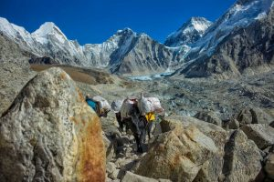 Transport zum Everest Base Camp